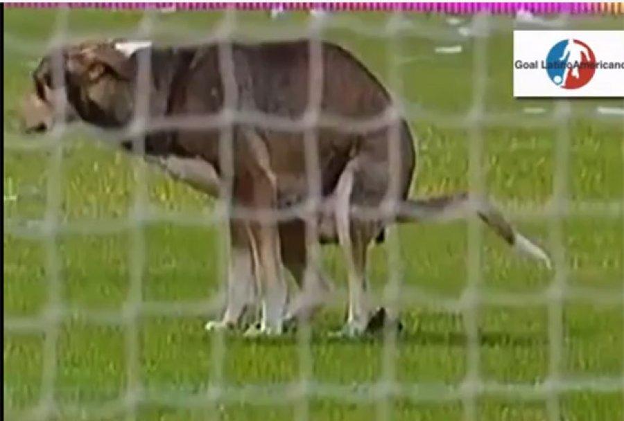 Pas se olakšao na terenu