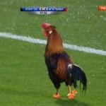Petao prekinuo utakmicu